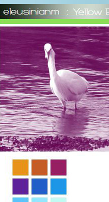 screenshot of titlebar of old website, little egret staring at you